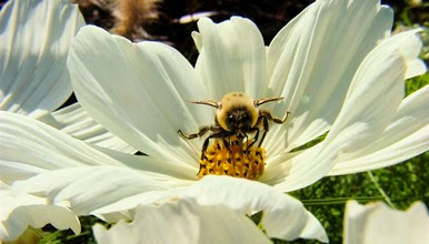 pollinator-week.jpg.662x0_q100_crop-scale