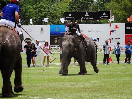 11. Polo pe elefanti.JPG