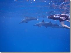 ハワイ島イルカ