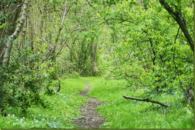 Wayland woods