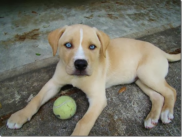 strange-dog-cross-breeds-005