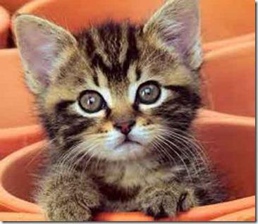 kucing-rasulullah-muezza