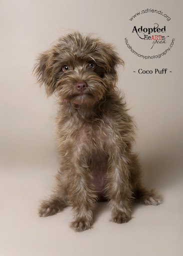 Coco Puff was rescued by Friends for Life Animal Rescue in Arizona. She was adopted and renamed Carlie. Carlie is a happy, friendly, energetic cuddlebug who is very attached to her new mom, Kristina.  Carlie's new family is delighted to have her in their home!