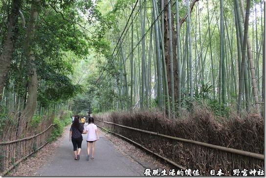 日本-野宮神社,野宮神社的必經之道,這裡從原本明亮的地方走進這兩旁種滿蔽天竹林步道,讓人感覺真的很不舒服,而且竹林的盡頭又是個墳墓區,總覺得怪怪的。也許是這種竹林的陰森真的讓人很不舒服,所以有一段竹林被砍掉了,有陽光透進來,就不會那麼恐怖了。