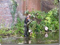 Tree clearance (23)