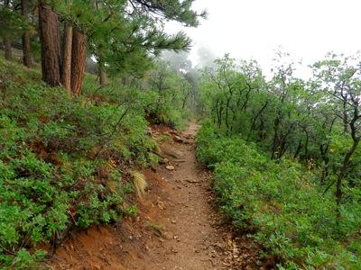 Transept Canyon trail, Grand Canyon