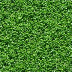 Seamless-Green-Grass-Pattern-1650704