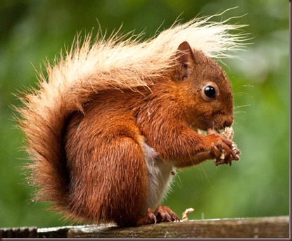 Amazing Animals Pictures Squirell (11)