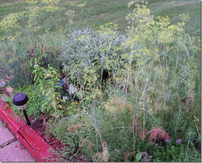 Outdoor2011spring 085