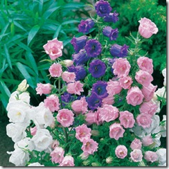 Bellflower_Mix