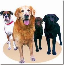 Cronograma de octubre de esterilizaciones quirúrgicas gratuitas para perros