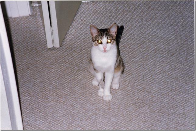 1996 Clea 2