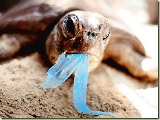 turtle plastico azul[1]