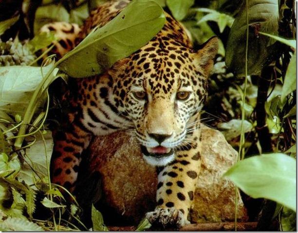 beautiful-amazon-rain-forest-28