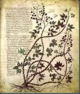 manuscrito_de_voynich