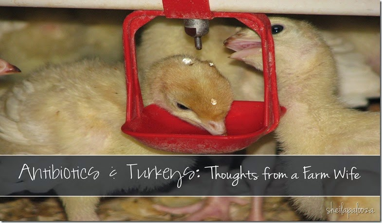 Antibitic and turkeys