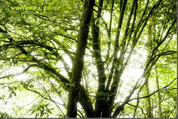 D700_2012-07-17_056