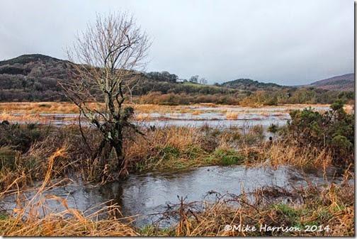 4-flooding-Mersehead