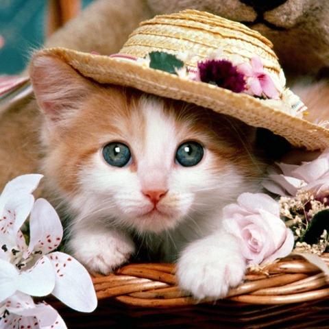 88-cute-kitten