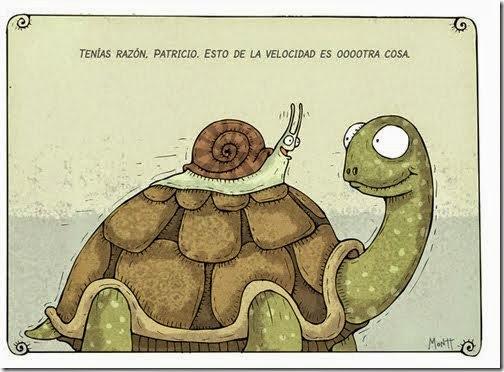 humor tortugas (37)