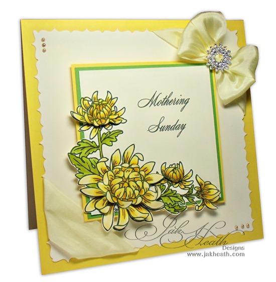 Chrysanthemum_JI_HOP1