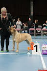 20130510-Bullmastiff-Worldcup-0374.jpg