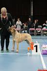 20130510-Bullmastiff-Worldcup-0374.jpg