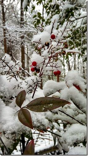 Snow 02 (25)