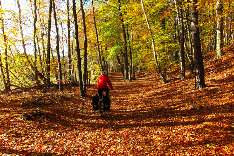 Riding on a red carpet of leaves, through the beech forests of Germany.