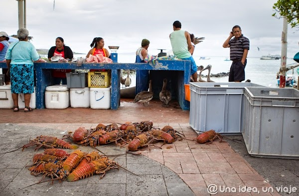 consejos-viajar-islas-galapagos-precios-alojamiento-tours-excursiones-unaideaunviaje-7.jpg