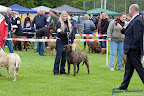 20100513-Bullmastiff-Clubmatch_31021.jpg