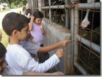 αμερικανική γεωργική σχολή (3)