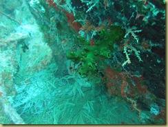 Soft Corals 3