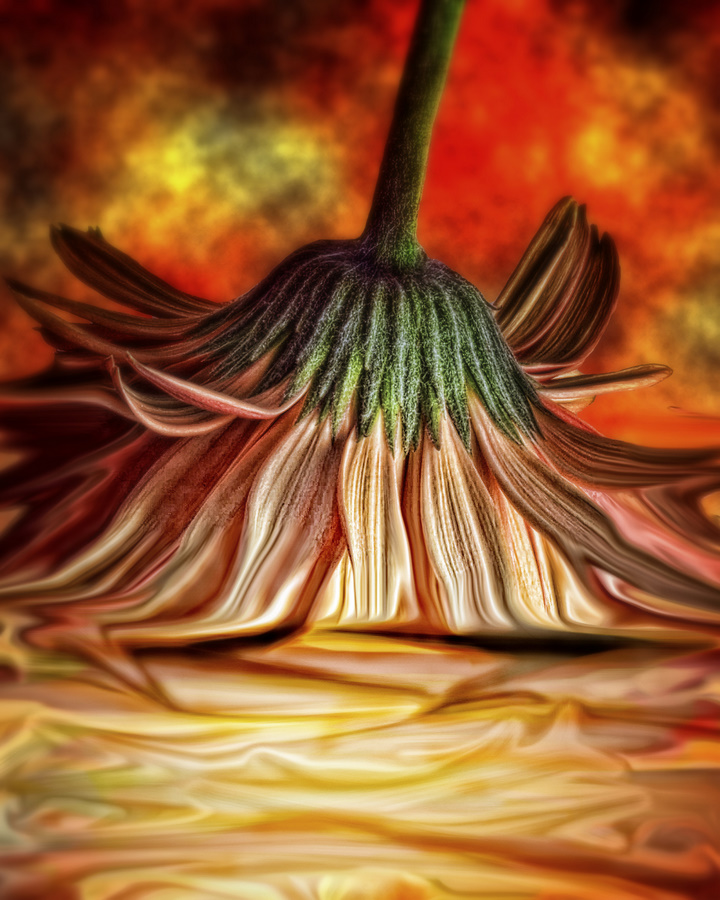 Orange Crush by Kelli Lauck - Digital Art Things