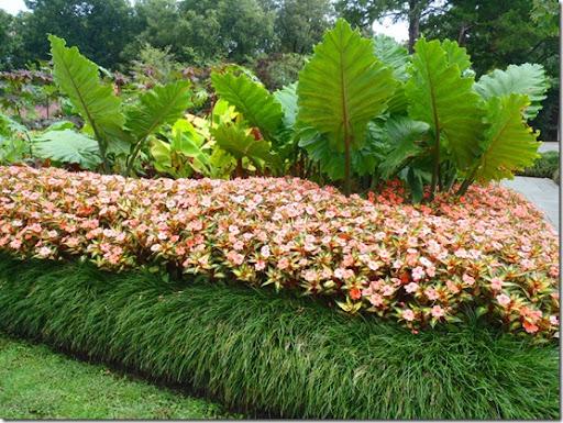 Beau Colocasia Planting Scheme