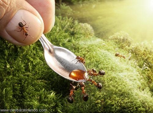 formigas inacreditaveis incriveis desbaratinando  (41)