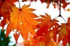 2011-10-15 Fall Lena 015