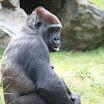 zoo_kolmarden_8882.jpg