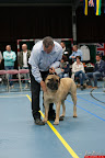 20130510-Bullmastiff-Worldcup-0850.jpg