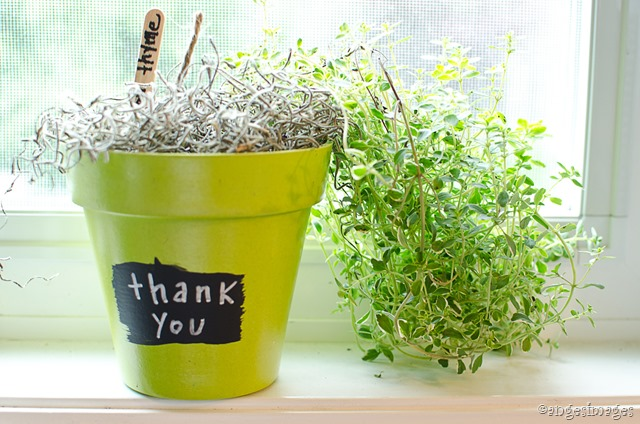 DIY Herb Plant Thank-You Gift | personallyandrea.com