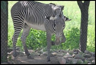 Zoo5 058