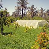 algerie-sud.jpg