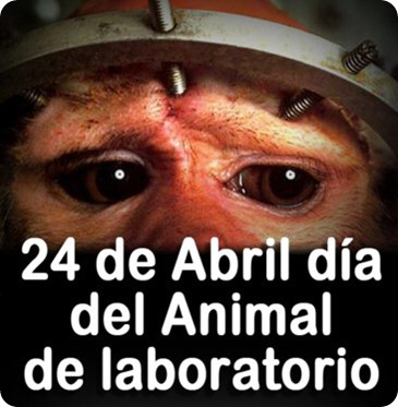 animal labo