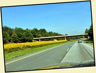 02b - Daylilies