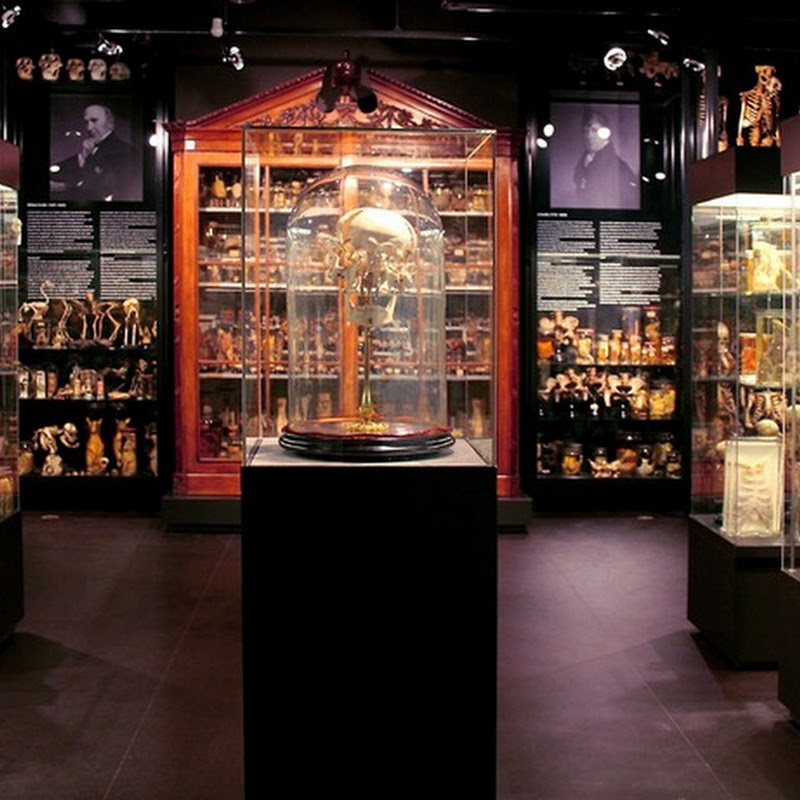 7 Strange Museums in Amsterdam