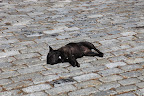Relaxing on Cobblestones