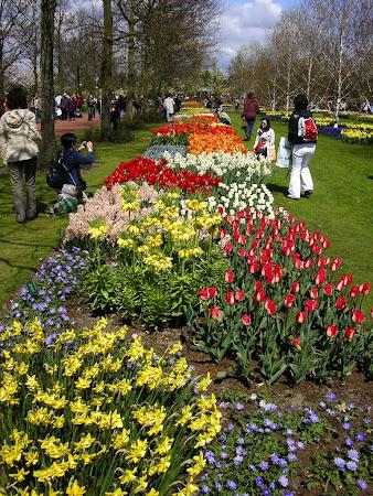 Visit Amsterdam: Amazing garden