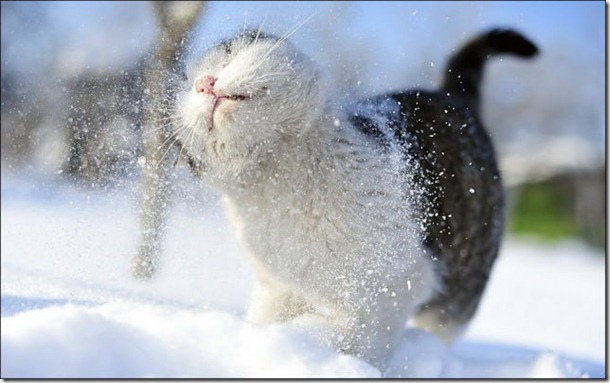 cats-play-snow-29