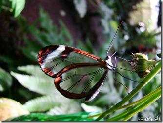 110528 X Schmetterlingsfarm (4)