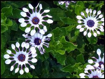 03d4 - Bar Harbor - Beautiful Flowers